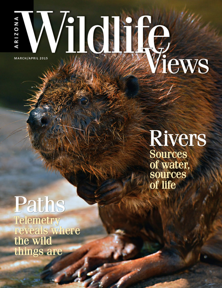 cover of Arizona Wildlife Views March/April 2015