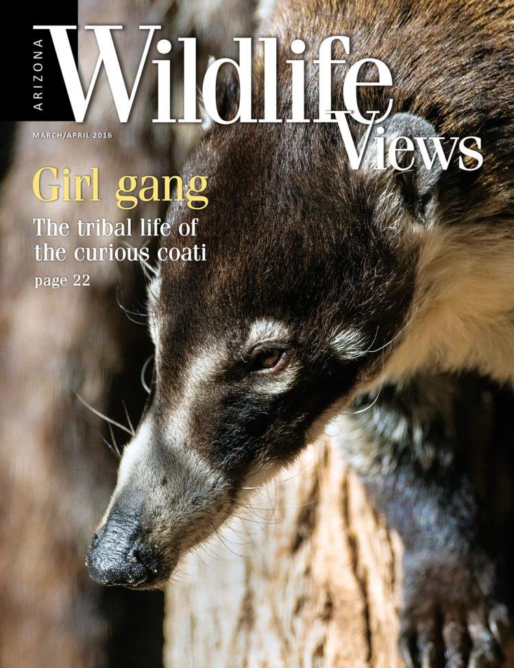 cover of Arizona Wildlife Views magazine