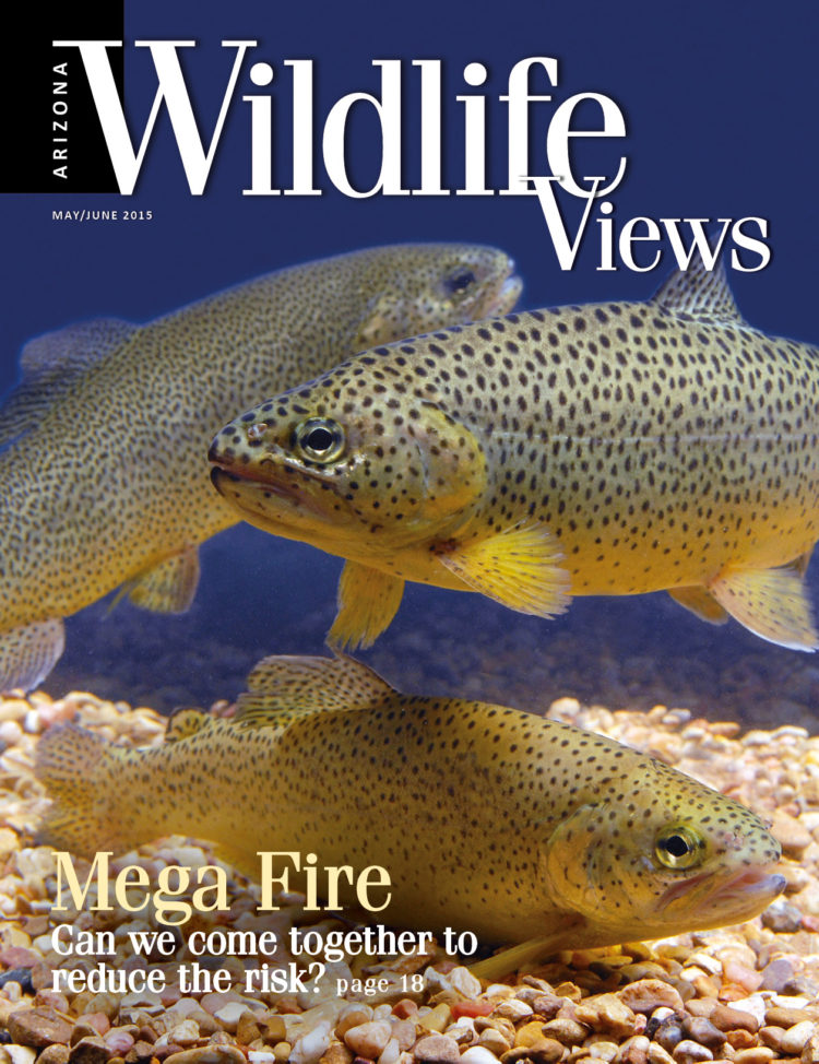 cover of Arizona Wildlife Views May/June 2015
